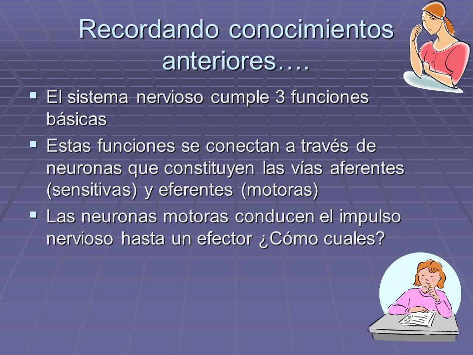 Aprendizajes Esperados Recordar los componentes del sistema nervioso periférico Recordar los componentes del sistema nervioso periférico Comprender las función de las vías aferentes Comprender las función de las vías aferentes Diferenciar entre músculo esquelético, liso y cardíaco.