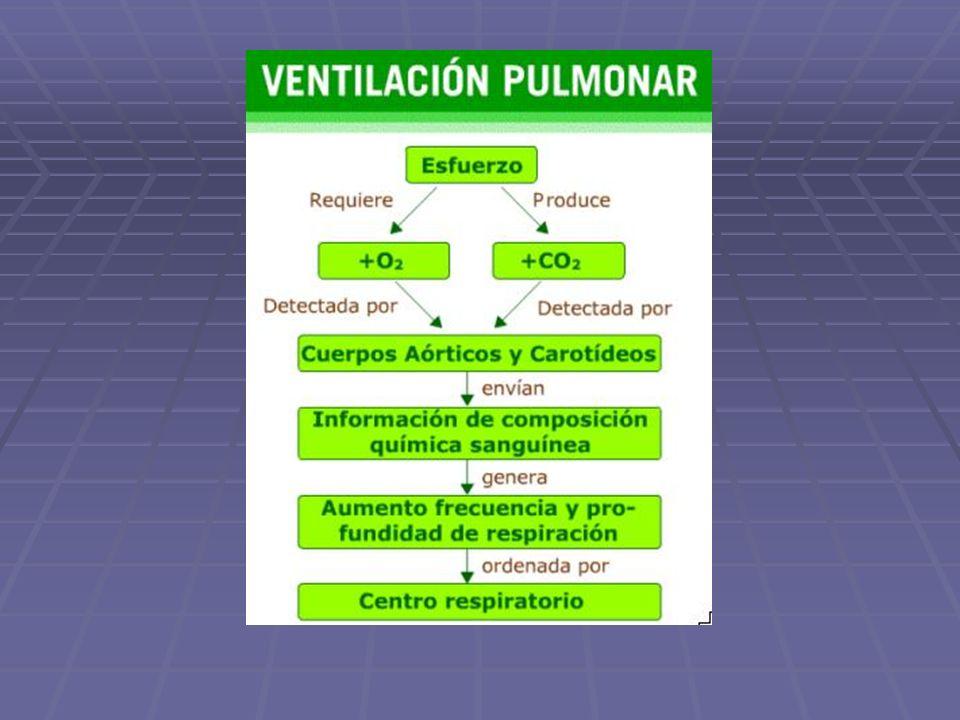 Actividad: Análisis del control autónomo de la ventilación pulmonar Analiza el siguiente esquema en base a las descripciones entregadas más arriba.