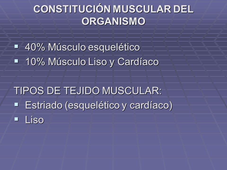 CONSTITUCIÓN MUSCULAR DEL ORGANISMO 40% Músculo esquelético 40% Músculo esquelético 10% Músculo Liso y Cardíaco 10% Músculo Liso y Cardíaco TIPOS DE T