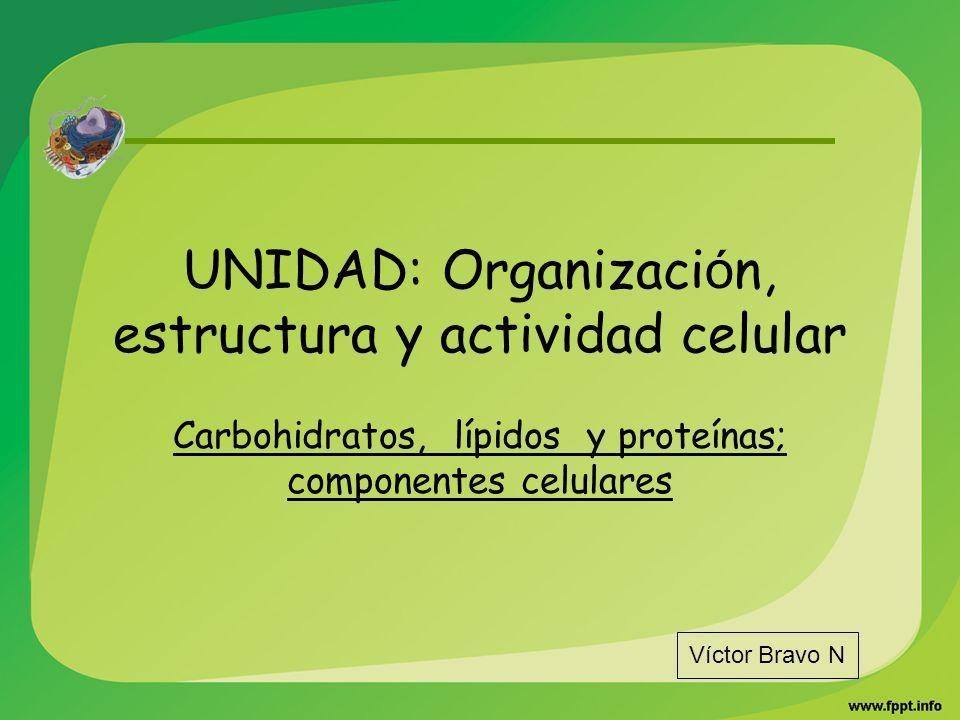 UNIDAD: Organizaci ó n, estructura y actividad celular Carbohidratos, lípidos y proteínas; componentes celulares Víctor Bravo N