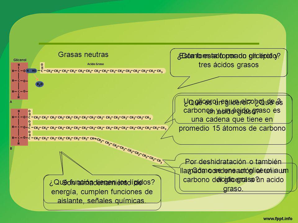 ¿Cómo esta formado un lípido? ¿Qué es un glicerol? ¿Qué es un acido graso? ¿Cómo se une un glicerol a un ácido graso? ¿Qué función tienen los lípidos?