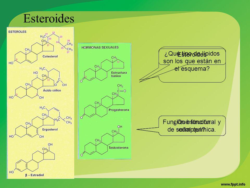 ¿Qué tipo de lípidos son los que están en el esquema? ¿Qué función cumplen? Esteroides Función estructural y de señal química.
