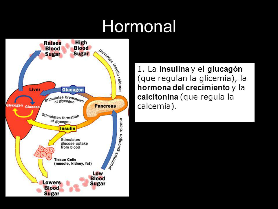 Hormonal 1. La insulina y el glucagón (que regulan la glicemia), la hormona del crecimiento y la calcitonina (que regula la calcemia).