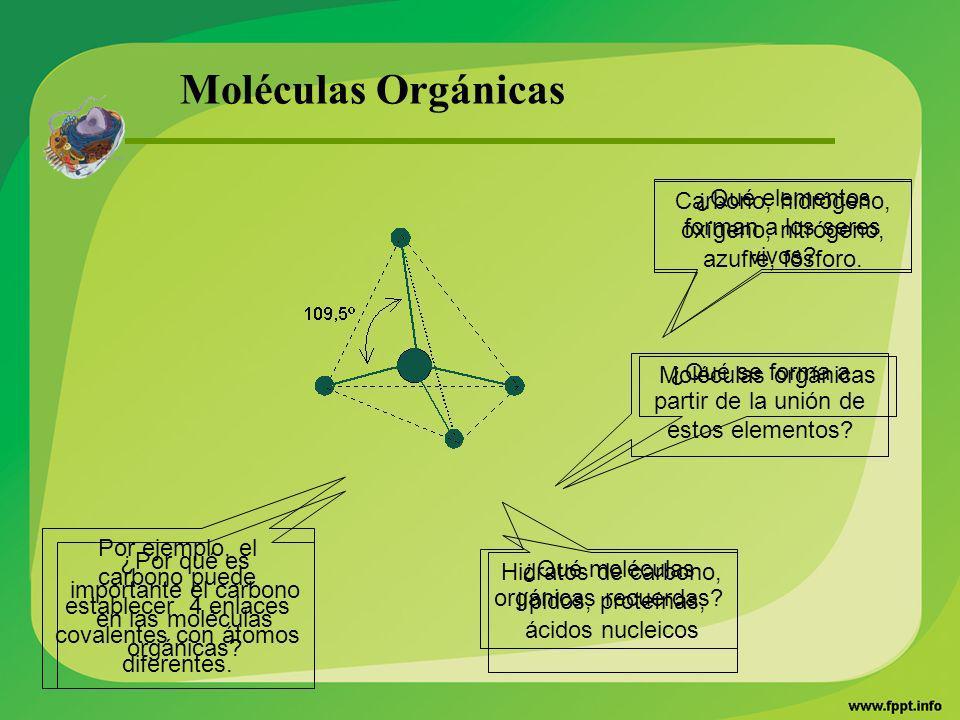 Moléculas Orgánicas ¿Qué elementos forman a los seres vivos? ¿Por qué es importante el carbono en las moléculas orgánicas? ¿Qué se forma a partir de l