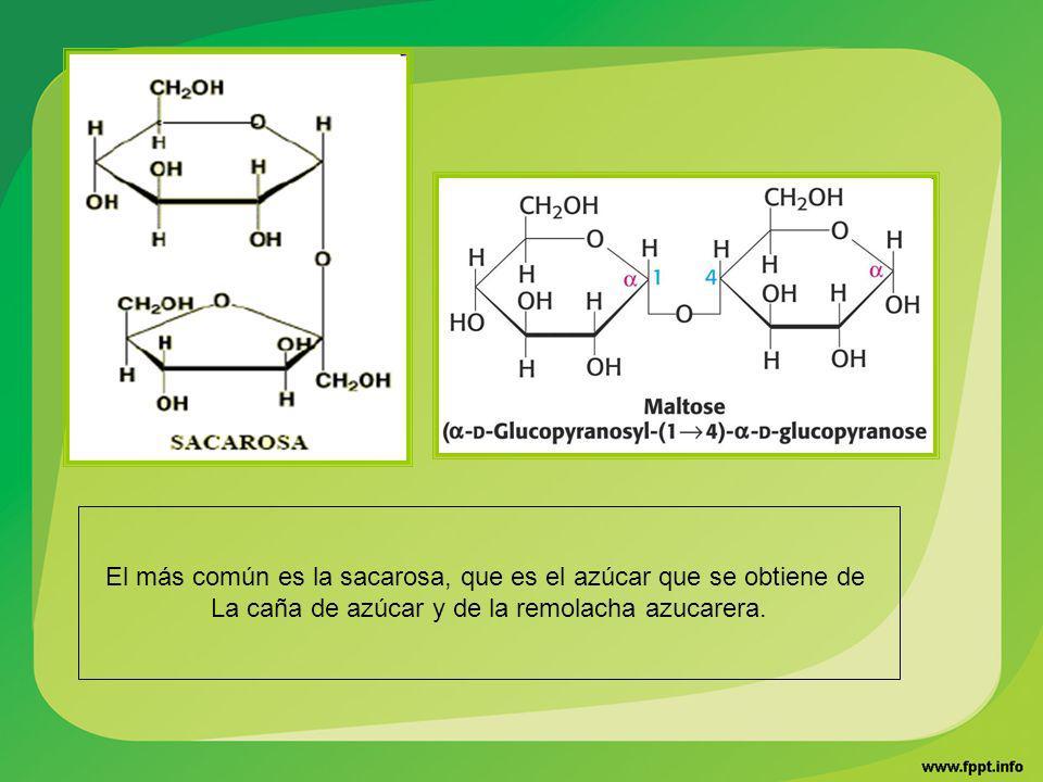 El más común es la sacarosa, que es el azúcar que se obtiene de La caña de azúcar y de la remolacha azucarera.
