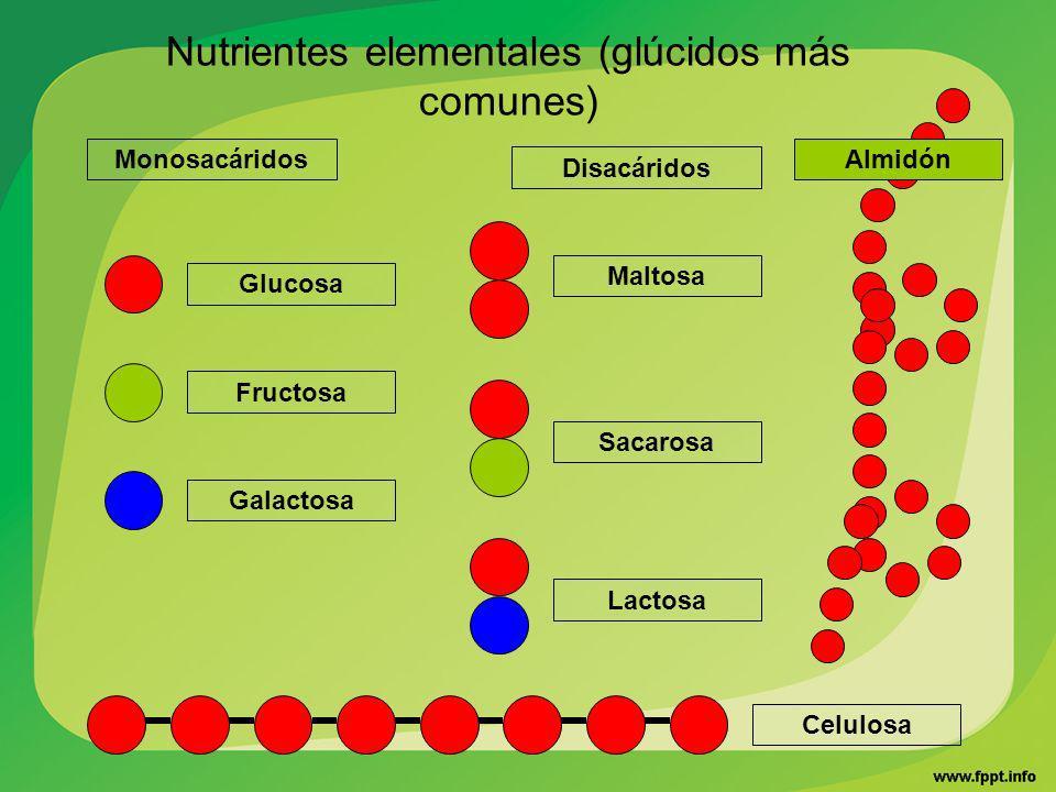 ¿Cómo están formados los polisacáridos.¿Qué polisacáridos conoces y que funciones cumplen.