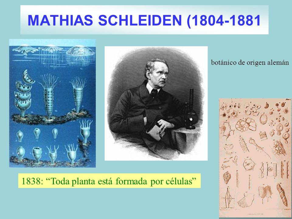 MATHIAS SCHLEIDEN (1804-1881 1838: Toda planta está formada por células botánico de origen alemán