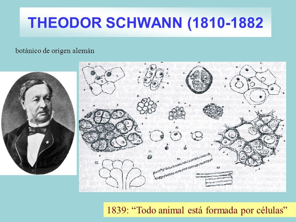 THEODOR SCHWANN (1810-1882 1839: Todo animal está formada por células botánico de origen alemán