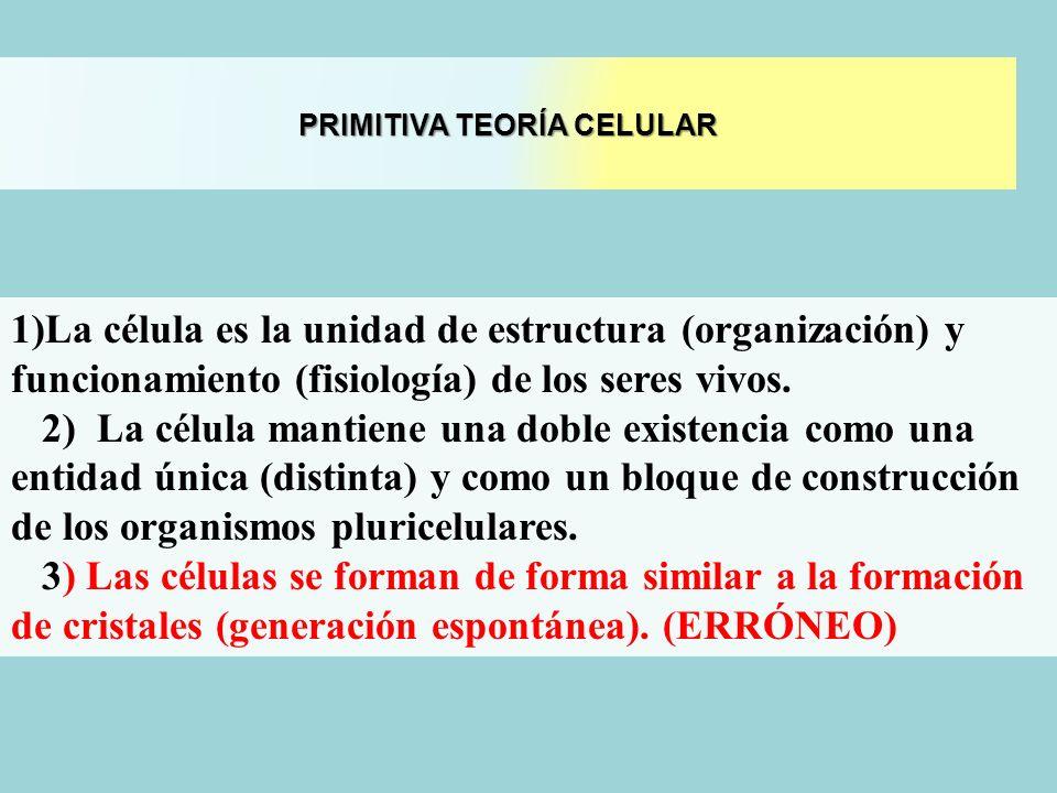 PRIMITIVA TEORÍA CELULAR 1)La célula es la unidad de estructura (organización) y funcionamiento (fisiología) de los seres vivos. 2) La célula mantiene