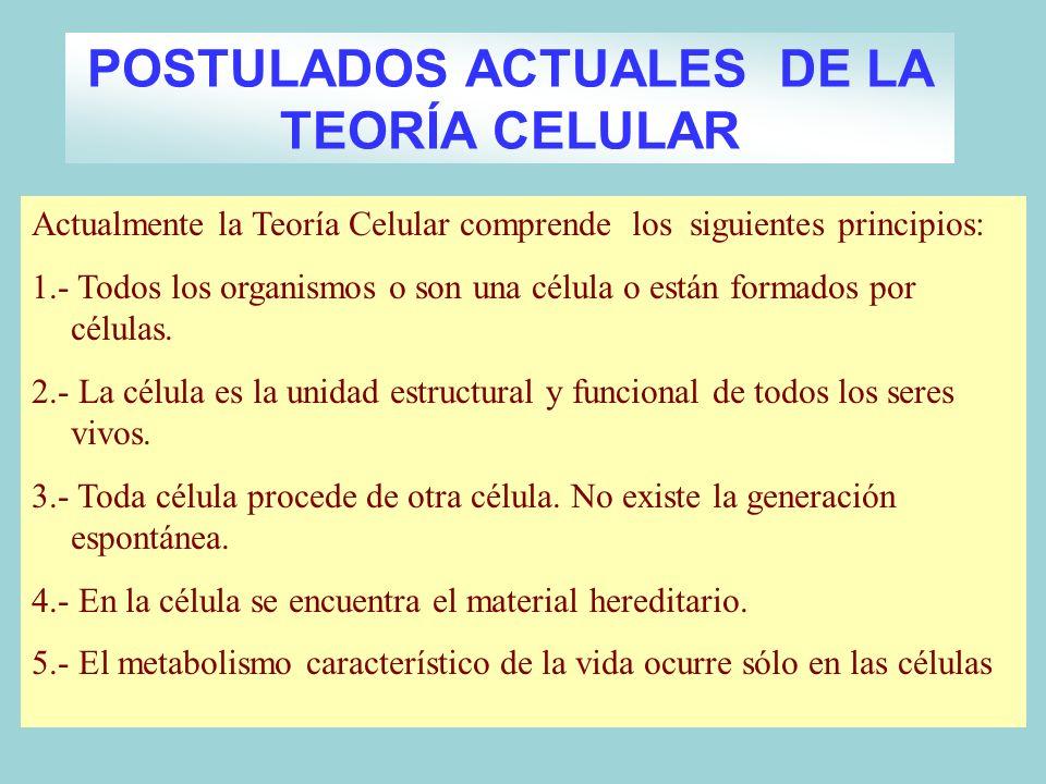 Actualmente la Teoría Celular comprende los siguientes principios: 1.- Todos los organismos o son una célula o están formados por células. 2.- La célu
