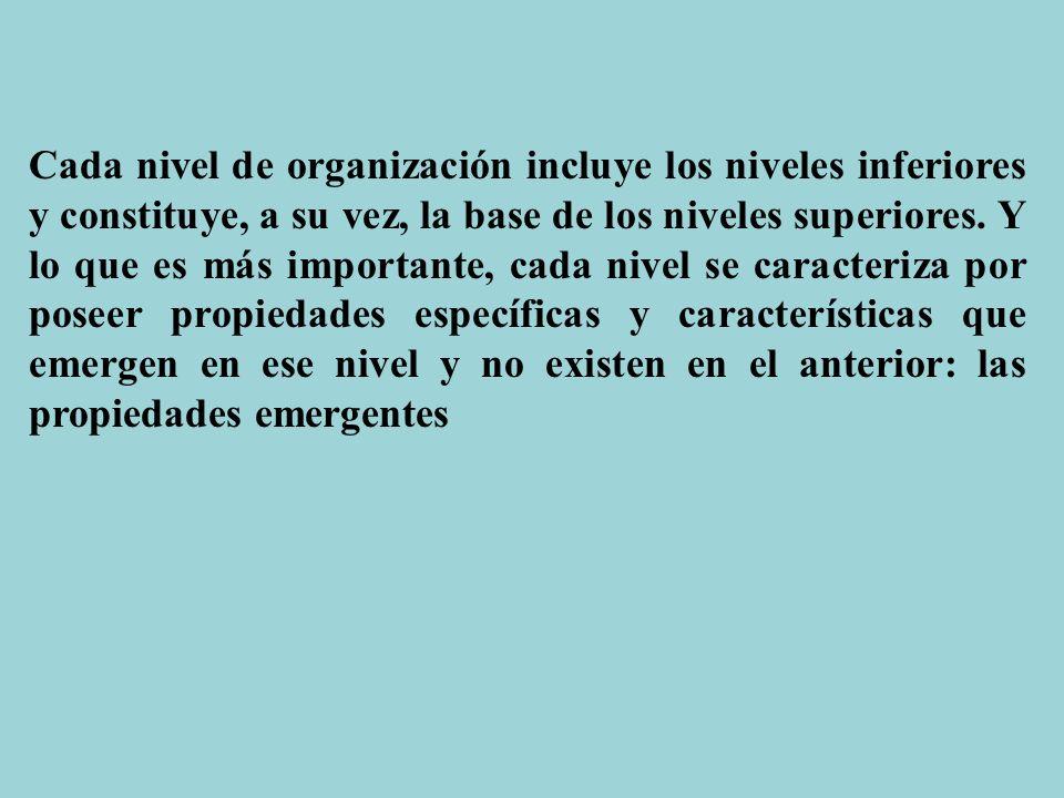 Cada nivel de organización incluye los niveles inferiores y constituye, a su vez, la base de los niveles superiores. Y lo que es más importante, cada