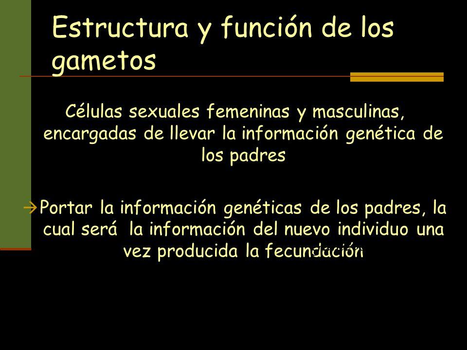 Estructura y función de los gametos Células sexuales femeninas y masculinas, encargadas de llevar la información genética de los padres Portar la info