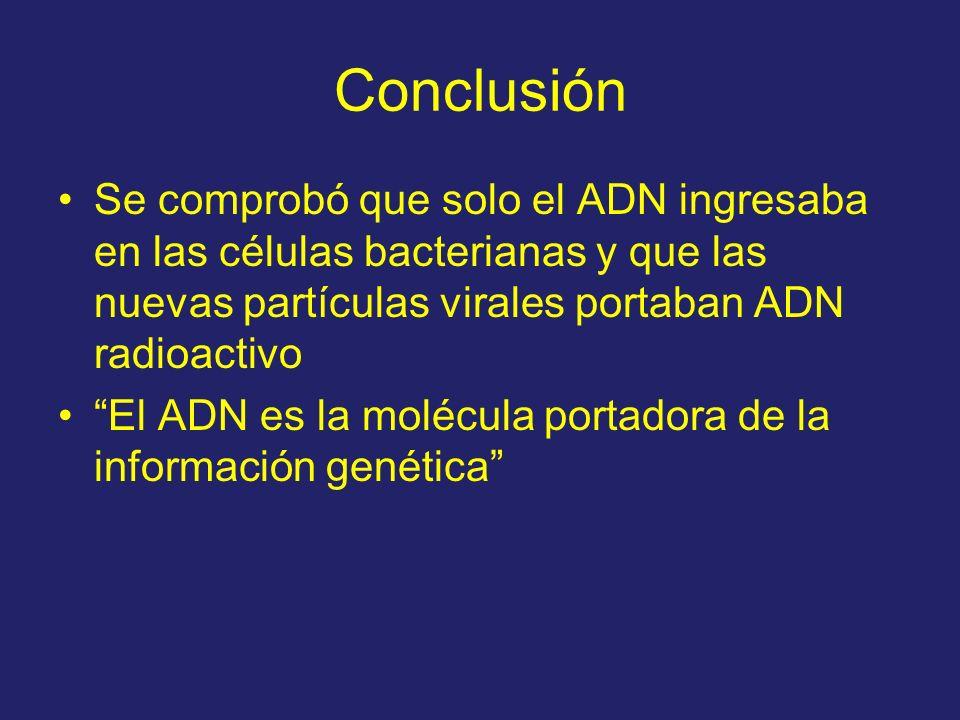 Conclusión Se comprobó que solo el ADN ingresaba en las células bacterianas y que las nuevas partículas virales portaban ADN radioactivo El ADN es la