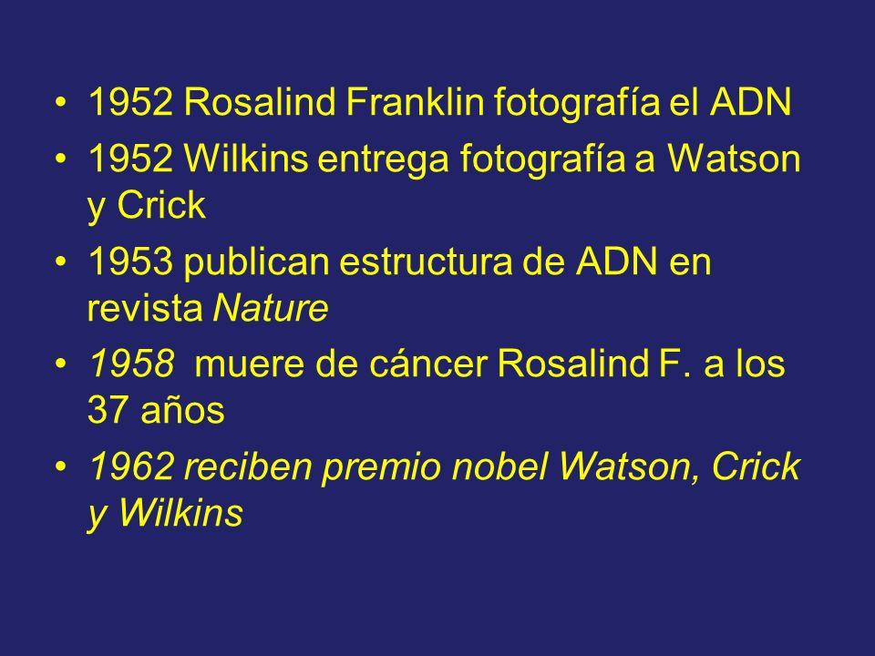 1952 Rosalind Franklin fotografía el ADN 1952 Wilkins entrega fotografía a Watson y Crick 1953 publican estructura de ADN en revista Nature 1958 muere