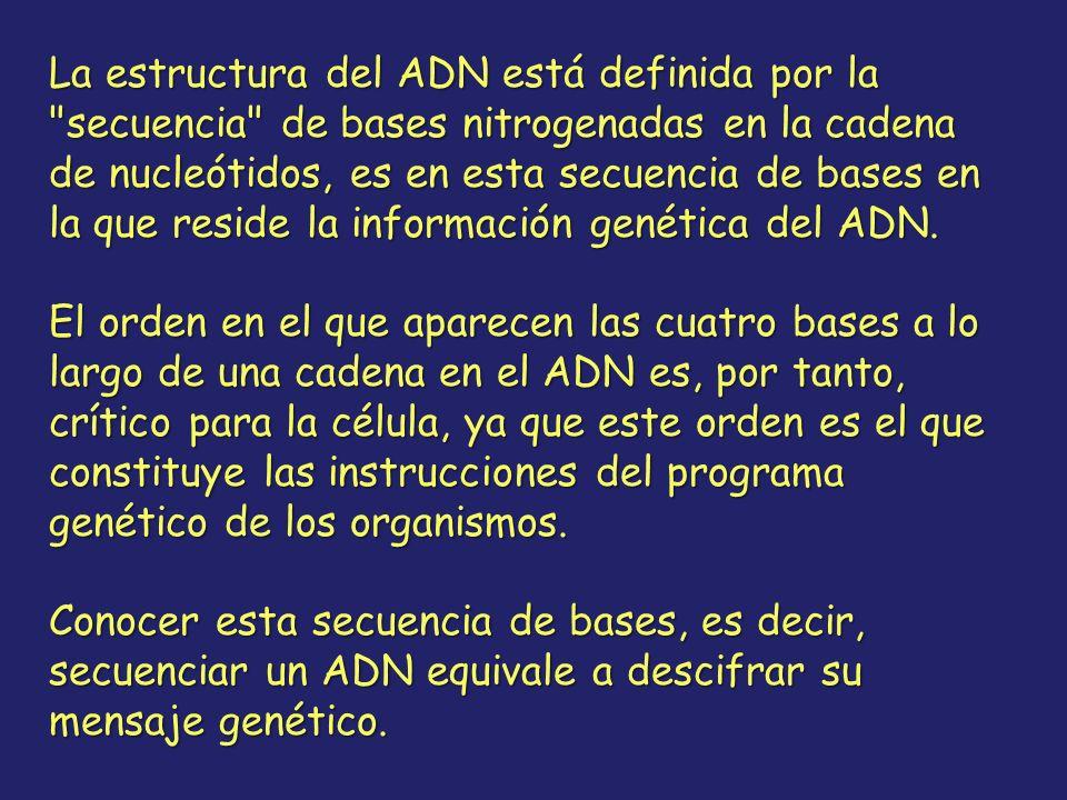 La estructura del ADN está definida por la