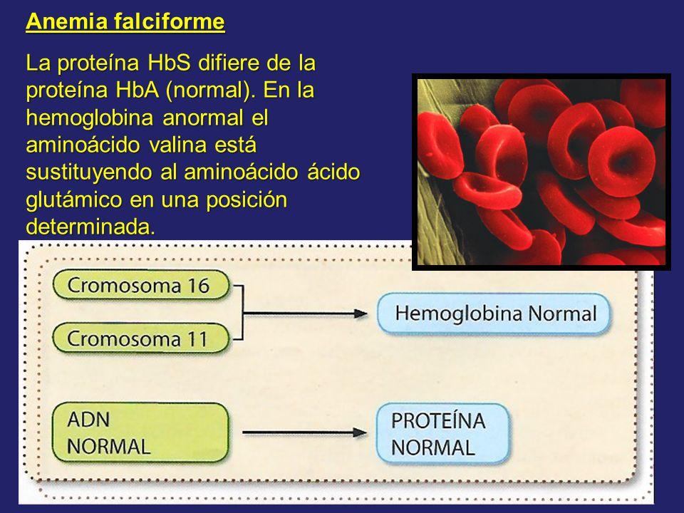 Anemia falciforme La proteína HbS difiere de la proteína HbA (normal). En la hemoglobina anormal el aminoácido valina está sustituyendo al aminoácido