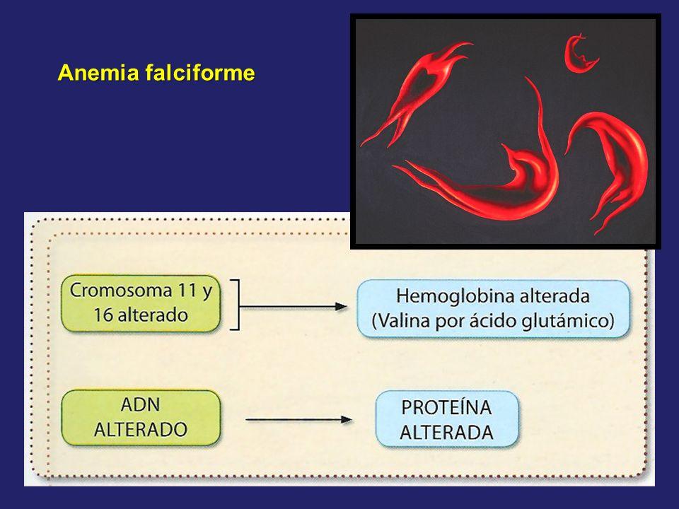 Ciclo reproductivo del fago