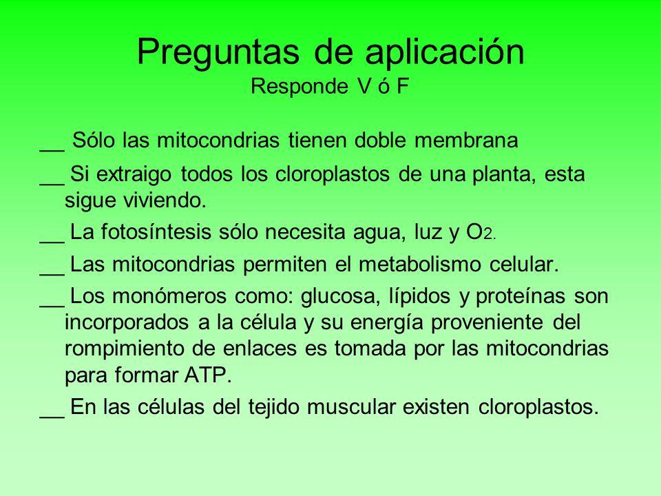 Preguntas de aplicación Responde V ó F __ Sólo las mitocondrias tienen doble membrana __ Si extraigo todos los cloroplastos de una planta, esta sigue