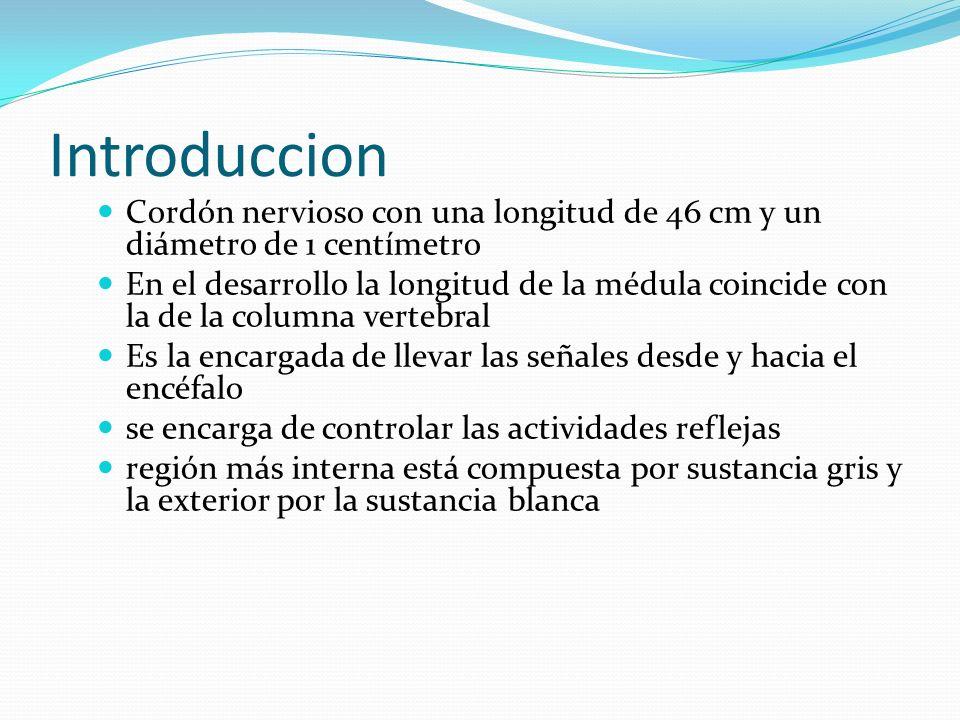 Raíces Raquídeas Vértebras Cervicales Vértebras Torácicas Vértebras Lumbares Sacro
