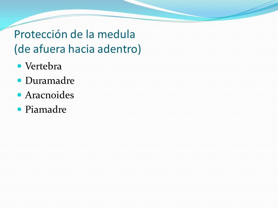 Protección de la medula (de afuera hacia adentro) Vertebra Duramadre Aracnoides Piamadre