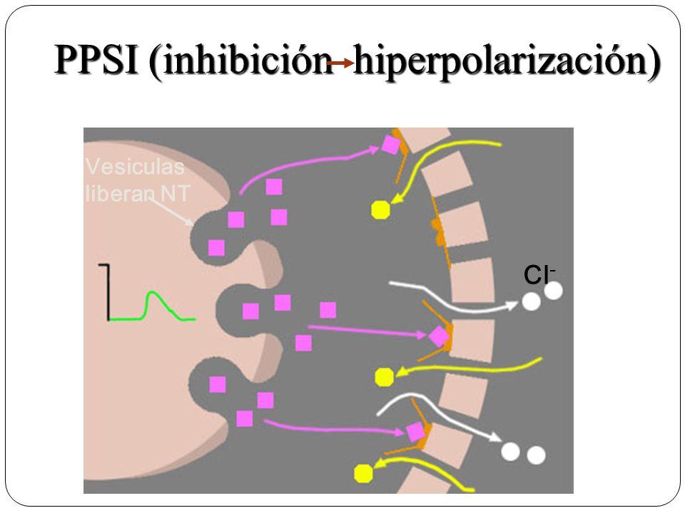 Cl - Vesiculas liberan NT PPSI (inhibición hiperpolarización)