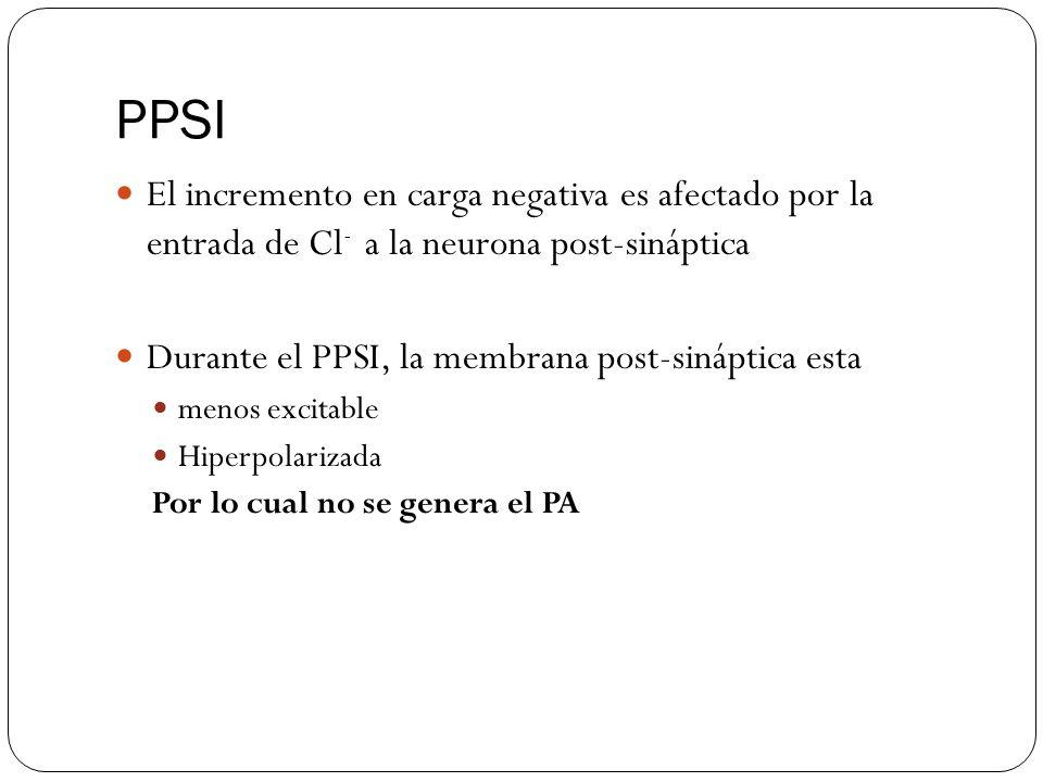 PPSI El incremento en carga negativa es afectado por la entrada de Cl - a la neurona post-sináptica Durante el PPSI, la membrana post-sináptica esta menos excitable Hiperpolarizada Por lo cual no se genera el PA