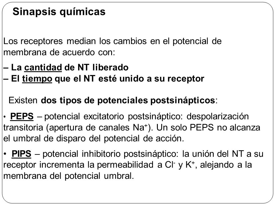 Na + K+K+ NT Vesiculas liberan NT EPSP (excitación despolarización)