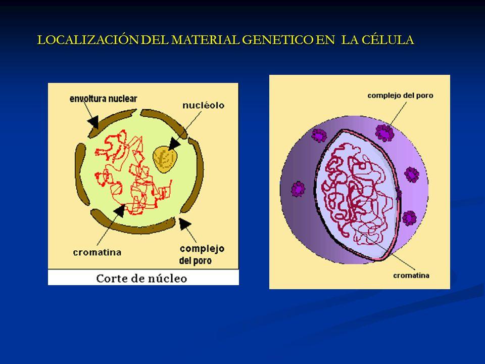 Cromatina - Cromosoma El material genético presenta aspectos distintos, según la etapa de vida en que se encuentre.
