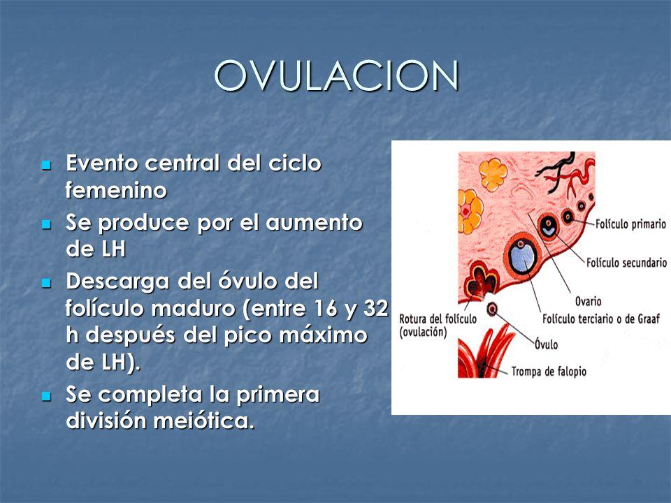 OVULACION Evento central del ciclo femenino Evento central del ciclo femenino Se produce por el aumento de LH Se produce por el aumento de LH Descarga