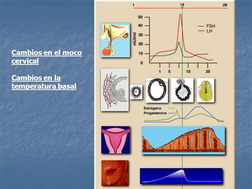 Cambios en el moco cervical Cambios en la temperatura basal