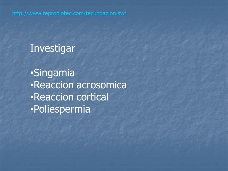 http://www.reprobiotec.com/fecundacion.swf Investigar Singamia Reaccion acrosomica Reaccion cortical Poliespermia