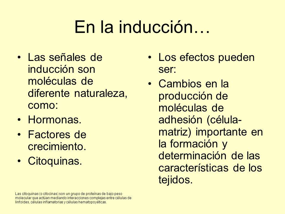 En la inducción… Las señales de inducción son moléculas de diferente naturaleza, como: Hormonas. Factores de crecimiento. Citoquinas. Los efectos pued