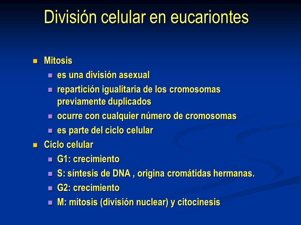 Mitosis Division nuclear, usualmente seguida de división celular.