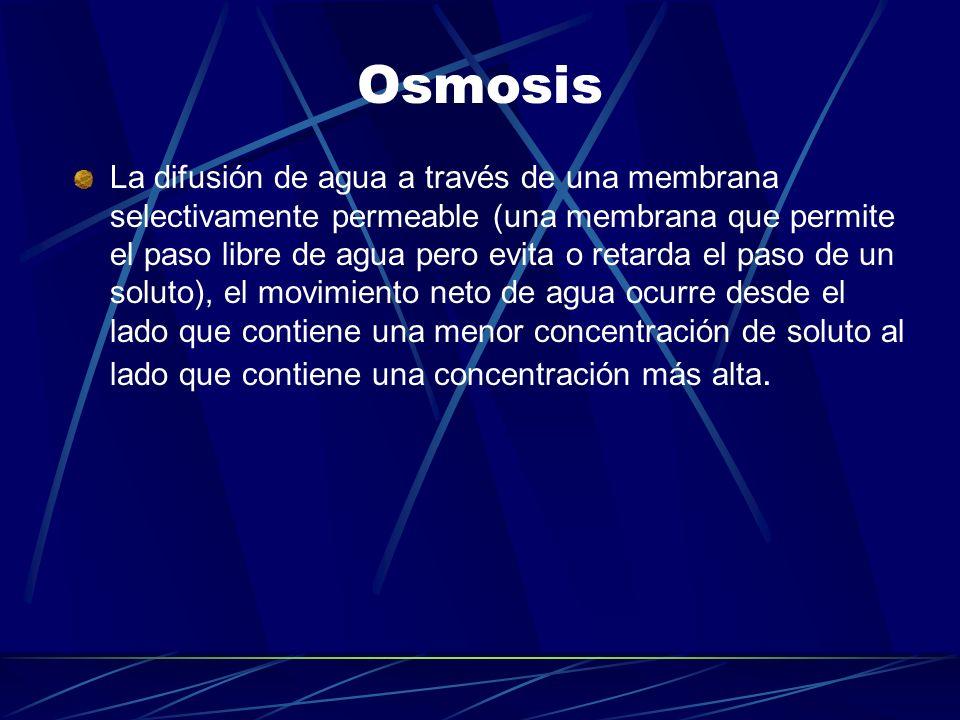 Osmosis La difusión de agua a través de una membrana selectivamente permeable (una membrana que permite el paso libre de agua pero evita o retarda el