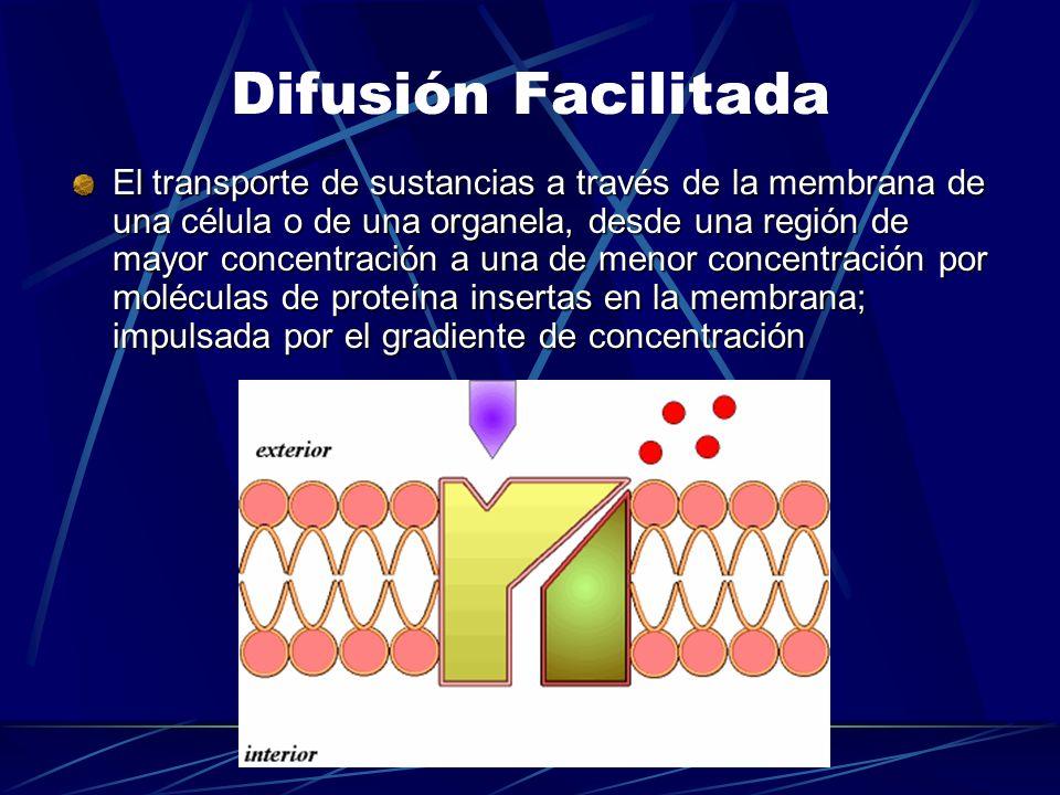 Difusión Facilitada El transporte de sustancias a través de la membrana de una célula o de una organela, desde una región de mayor concentración a una