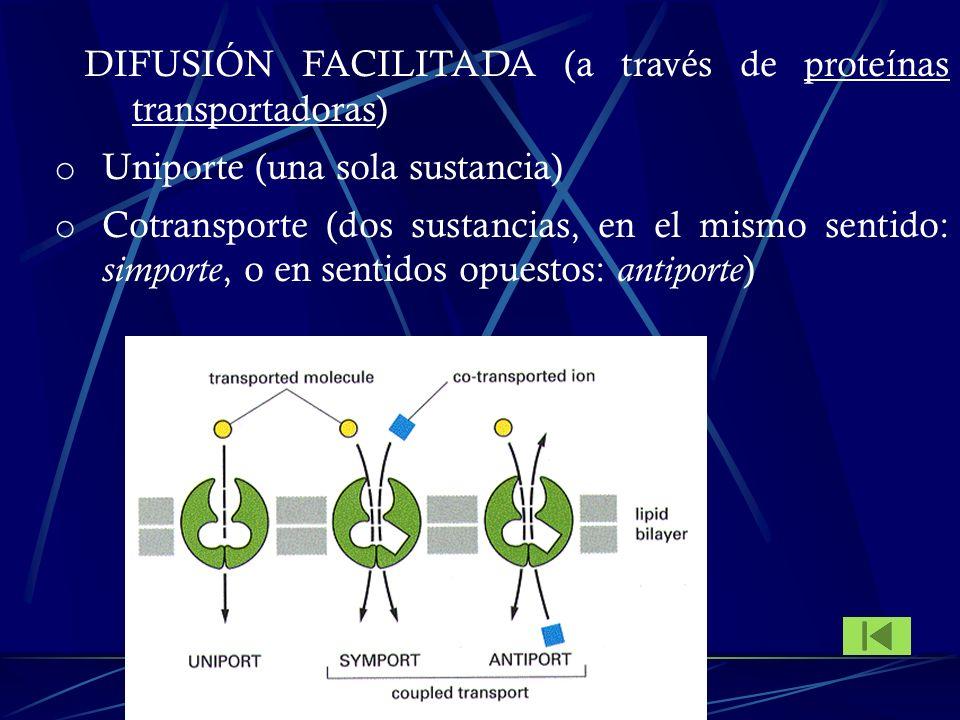 DIFUSIÓN FACILITADA (a través de proteínas transportadoras) o Uniporte (una sola sustancia) o Cotransporte (dos sustancias, en el mismo sentido: simpo