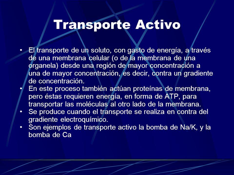 Transporte Activo El transporte de un soluto, con gasto de energía, a través de una membrana celular (o de la membrana de una organela) desde una regi