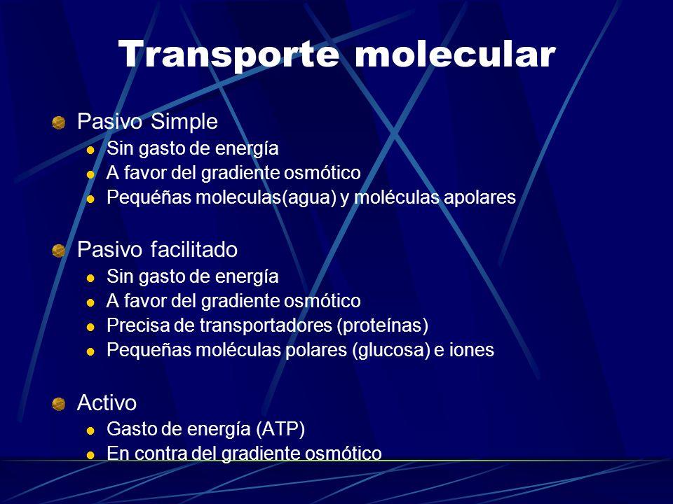 Transporte molecular Pasivo Simple Sin gasto de energía A favor del gradiente osmótico Pequéñas moleculas(agua) y moléculas apolares Pasivo facilitado