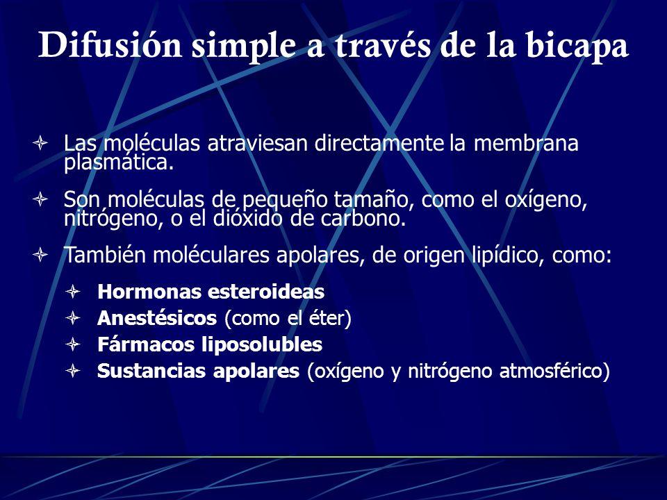 Difusión simple a través de la bicapa Las moléculas atraviesan directamente la membrana plasmática. Son moléculas de pequeño tamaño, como el oxígeno,