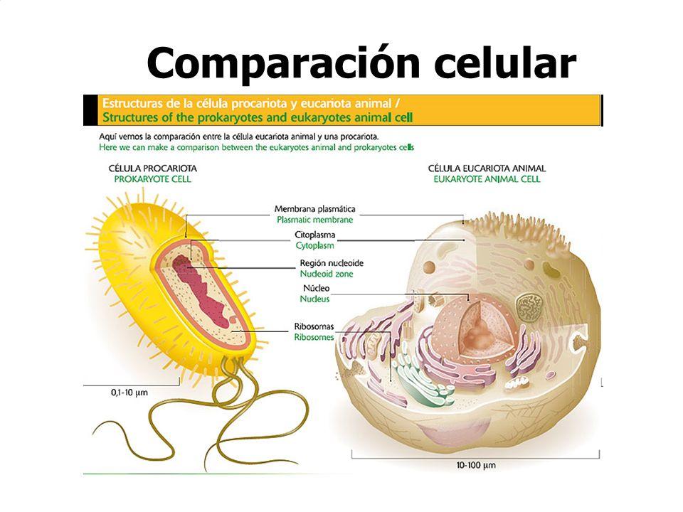 Comparación celular