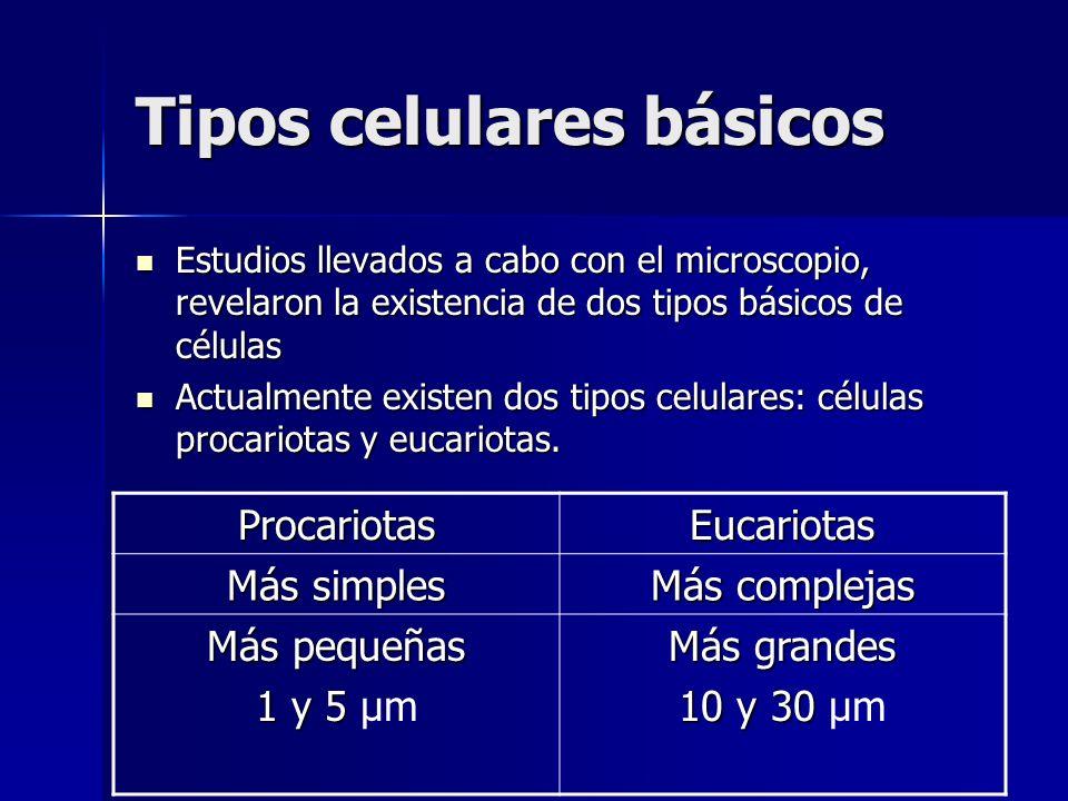 Tipos celulares básicos Estudios llevados a cabo con el microscopio, revelaron la existencia de dos tipos básicos de células Estudios llevados a cabo