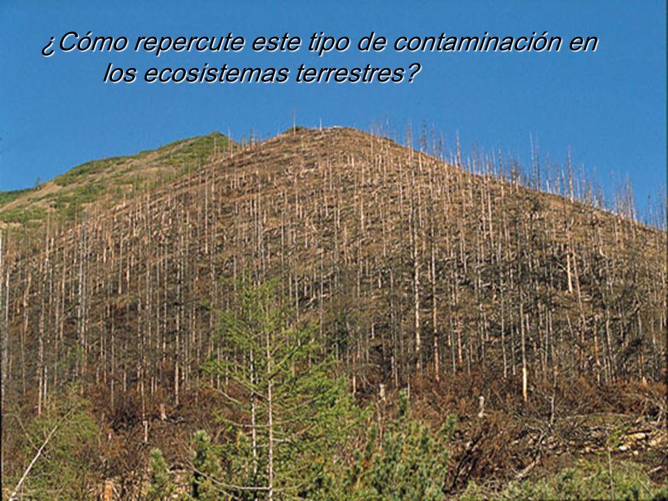 ¿Cómo repercute este tipo de contaminación en los ecosistemas terrestres?