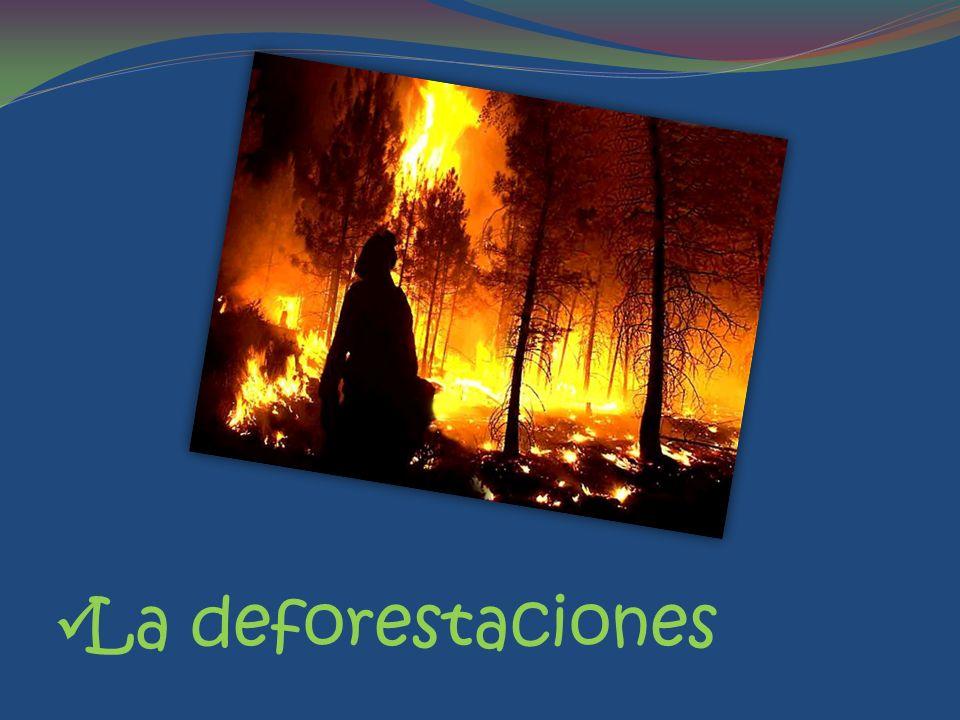 La deforestaciones