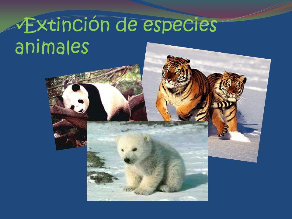 Extinción de especies animales