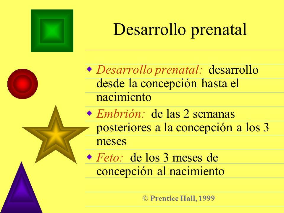 © Prentice Hall, 1999 Desarrollo prenatal Desarrollo prenatal: desarrollo desde la concepción hasta el nacimiento Embrión: de las 2 semanas posteriore