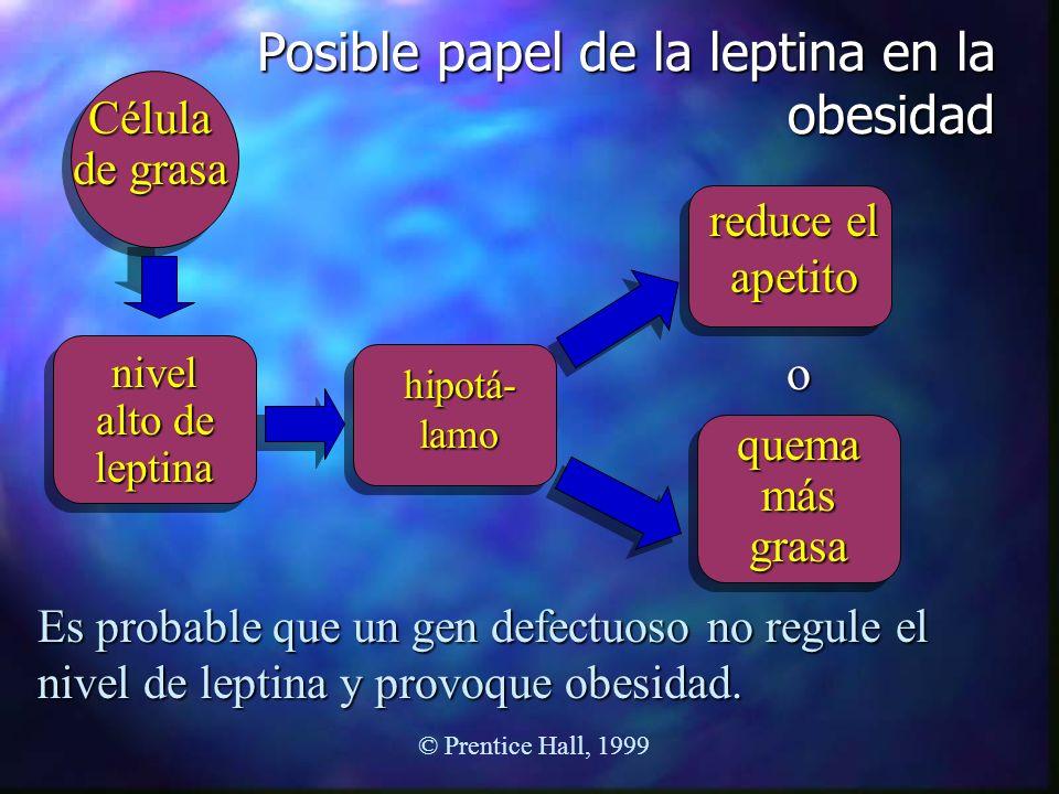 Posible papel de la leptina en la obesidad Célula de grasa nivel alto de leptina hipotá- lamo reduce el apetito quema más grasa o Es probable que un g