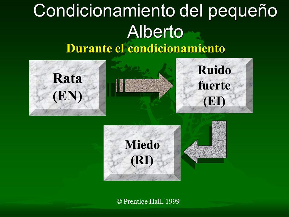© Prentice Hall, 1999 Condicionamiento del pequeño Alberto Durante el condicionamiento Rata (EN) Ruido fuerte (EI) Miedo (RI)