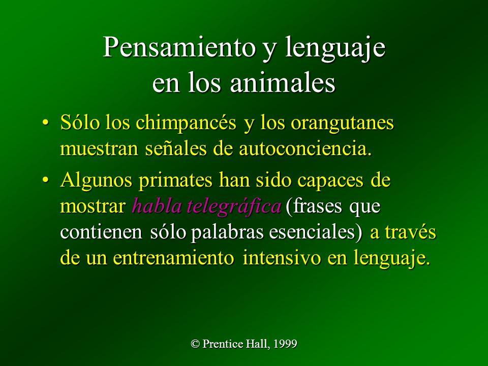 © Prentice Hall, 1999 Pensamiento y lenguaje en los animales Sólo los chimpancés y los orangutanes muestran señales de autoconciencia.Sólo los chimpancés y los orangutanes muestran señales de autoconciencia.