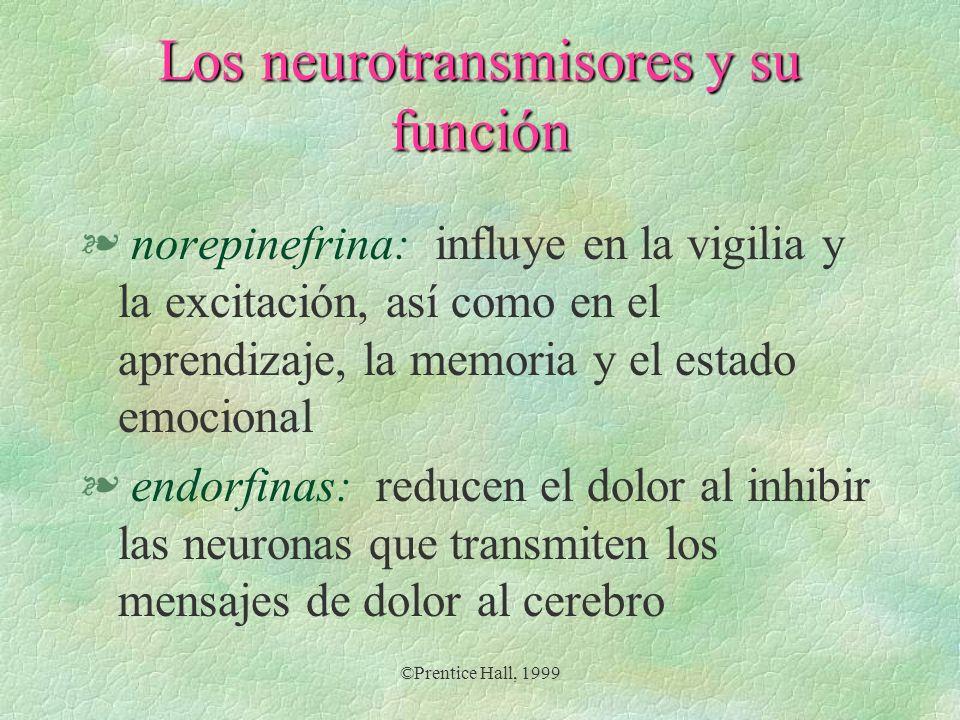 ©Prentice Hall, 1999 Los neurotransmisores y su función § norepinefrina: influye en la vigilia y la excitación, así como en el aprendizaje, la memoria