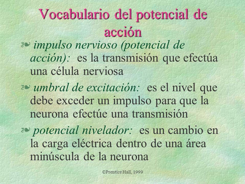 ©Prentice Hall, 1999 Vocabulario del potencial de acción § impulso nervioso (potencial de acción): es la transmisión que efectúa una célula nerviosa §